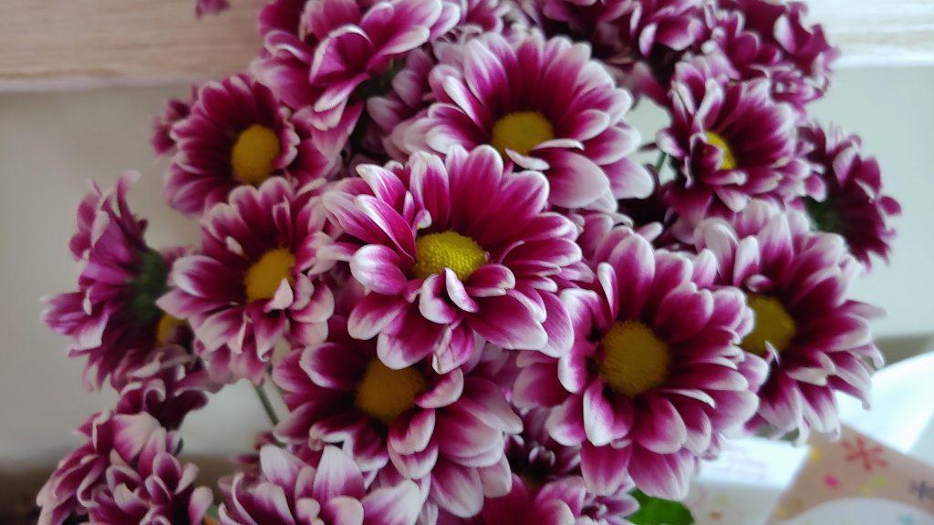 Alissa Pink White Flowers