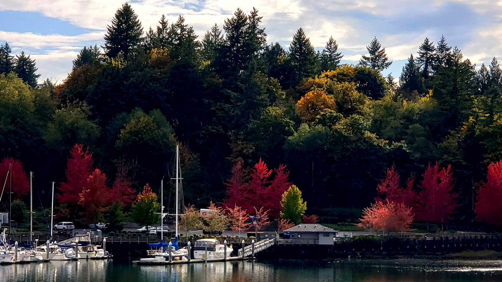 Harbor-Boat-Fall-Leaves